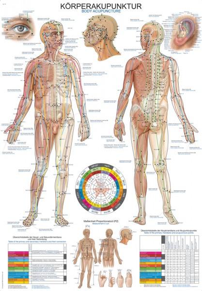 """Lehrtafel """"Körperakupunktur"""", 50x70cm"""
