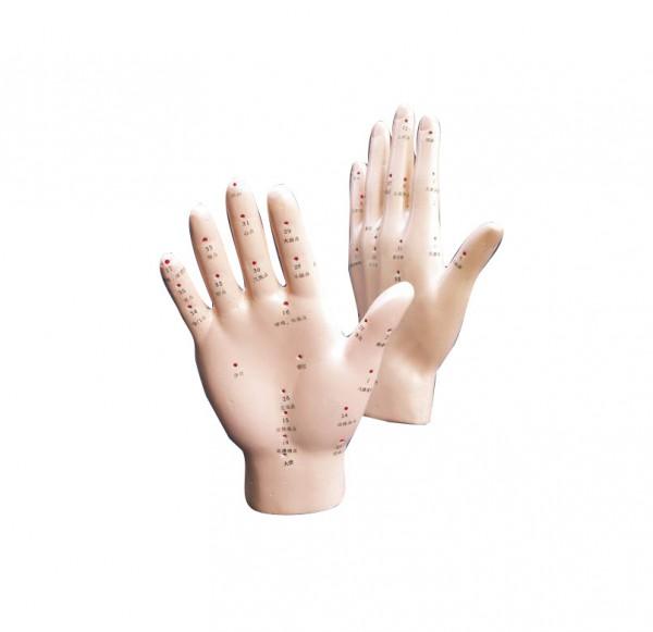 Akupunkturmodell Hand